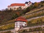 Herzoglicher Weinberg mit Blick auf Schloss 'Neuenburg'