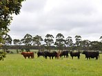 We are a working cattle station so you can relax and enjoy watching the cattle graze in the fields