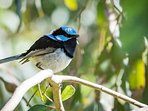 We have an abundance of birdlife from Fairy Wrens to Wedge Tailed Eagles