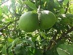 Fruit trees on property.