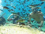 Scuba diving and snorkeling in Green Bay Protaras