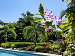 Tropical foliage and orchids invite your to enjoy the beauty of this  paradise