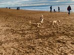 Dogs enjoying the beach at Exmouth