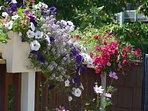 Summer deck flowers