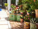 Flowers and colorful Mexican ceramic pots.