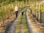 Outside the grounds you can enjoy a walk thru some vineyards and a wooded hill area
