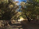 camino desde el centro de San Pedro de Atacama hacia la cabaña...