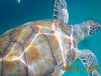 we can help you to arrange trips to swim with the turtles