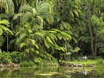 Take a peaceful walk in the Tamborine  Rain Forest, 37 minutes by car though the countryside