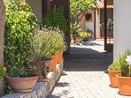 Oregano, lemon thyme, basil and lavender give the villa a pleasant aroma!