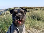 and we have excellent dog friendly beaches just 15 minutes away.