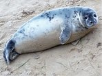 Seal colonies, birdwatching and wildlife reserves