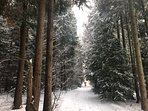 Wonderful Winter Walks