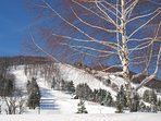 Located just 15 minutes from WISP Resort