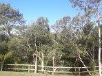 Casas estilo Piedra 2 ambientes - Base 2 personas (hta 4 huespedes): Vista a parque, arroyo y bosque
