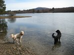 Ziggy and Murphy at Loch Vaa (8 min drive and 10 min walk from No. 10)
