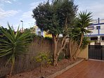 Pretty front garden with olive and orange tree, yukkas, lovely bouganvillea and BBQ