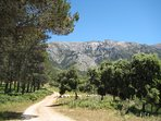The National Park just above us, for walking, cycling or strolling amongst the cool pine woods