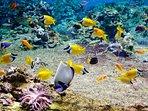 les poissons et coraux, que l'on peut découvrir en snorkeling