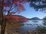 The beauty of Acadia for all seasons.