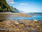 Na Pali Coast & Turtles (Honu)