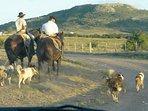 Ecoturismo y Turismo rural