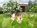 Families & Friends-Green Treasure House Fortuna #8