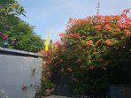 Bougainville bless !