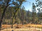 Thousands of trees on Footman Ridge.