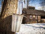 Enjoy Canadian Maple Sugar at the Sugar Shack, a short drive away
