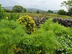 views towards the'caerneddau'mountain range from garden
