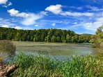 The lake in summer transforms into a wildlife sanctuary.