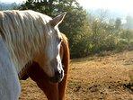Tylca et Melo nos chevaux!