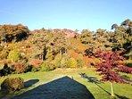 Autumn morning view of the garden