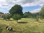 The orchard that backs on to the Milk House terrace