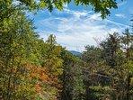 Pine Splendor