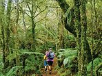Tarawera trail walk