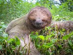 sloth in the garden