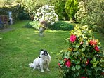 Roxy enjoying the garden in bloom