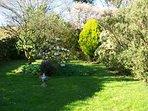 another garden view