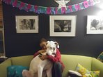 Owner's deaf Great Dane puppy, 'Salt'. At 18 months/115lbs, she is the biggest dog on la isla!
