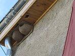 nichoirs à hirondelles attenant au gîte
