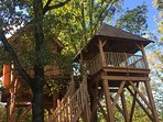 la Forêt : votre maison au milieu d'une clairière, à 5 m du sol