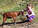 Goat Helper1
