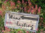 Vineyard in St Ewe