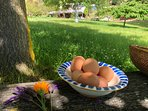 Breakfast included, farm fresh organic eggs, homemade bread and jam, muesli, tea & coffee