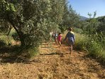 Children will love exploring the orchard and picking lemons from the old lemon tree