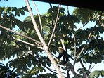 Enjoy watching neighboring birds and monkeys playing in the trees outside the Living room windows.