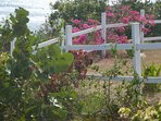Native flowering plants in cottage front yard