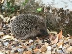 Leon the hedgehog may pay you a visit while you enjoy the outdoor space!